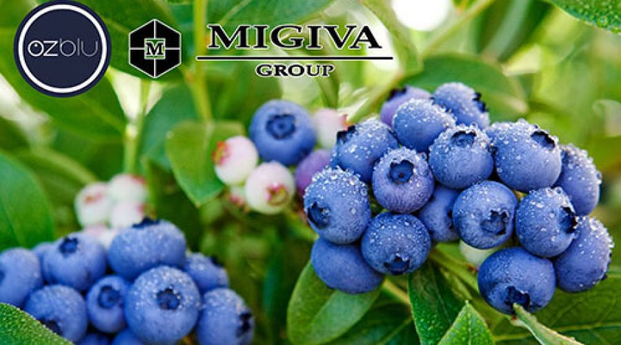 MIGIVA Group y Ozblu